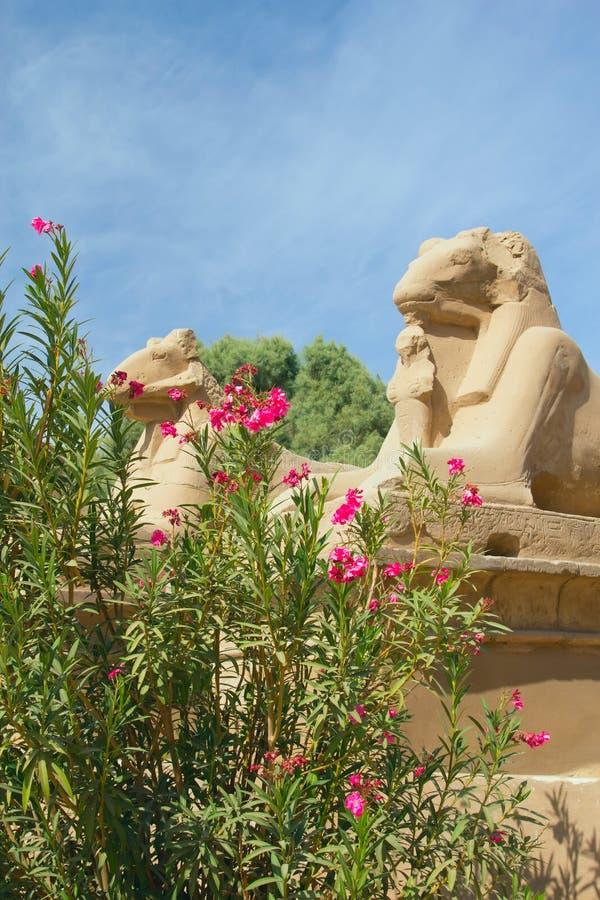 karnak Египета трамбует висок статуй стоковые фото