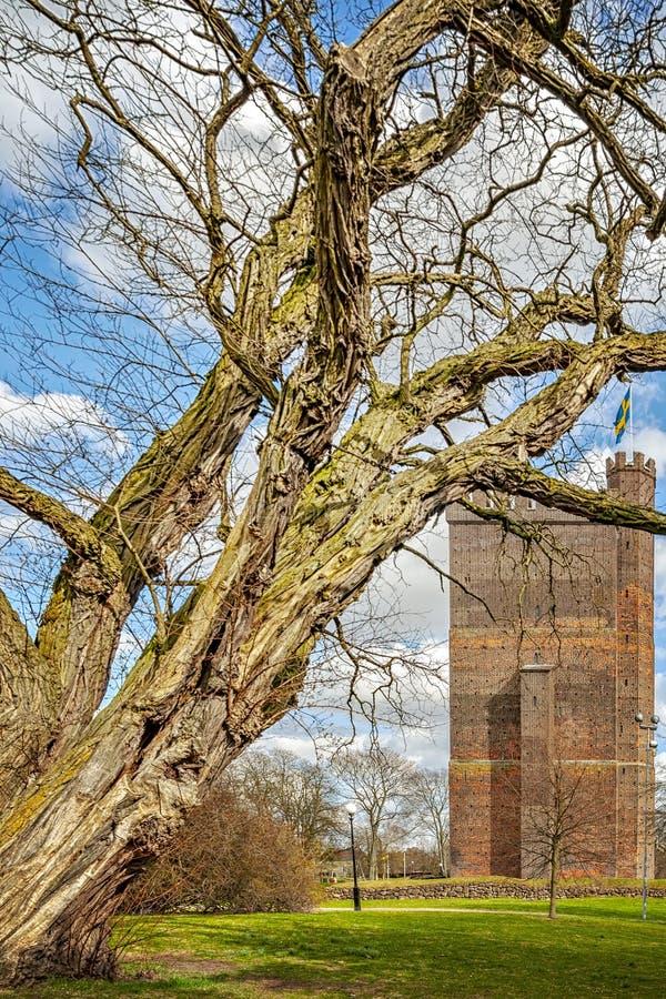 Karnan utrzymanie Za drzewem zdjęcia royalty free