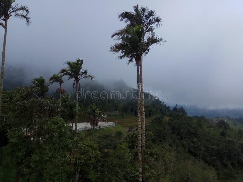 Karomba Pinrang royalty-vrije stock afbeelding