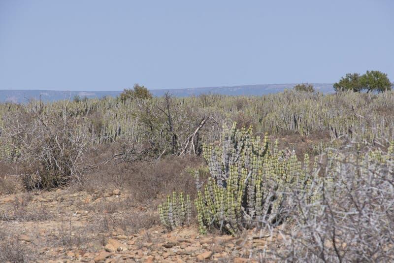 Karoo Noors field royalty free stock images
