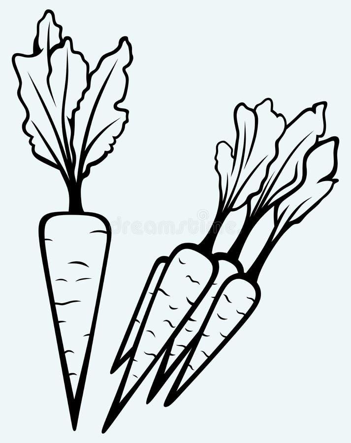 Karottengemüse mit Blättern stock abbildung