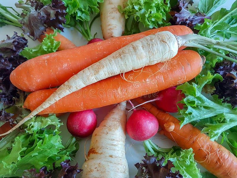 Karottenkohlrabi des frischen Mischgemüses gesunder Nahrungsmittel, stockfotografie