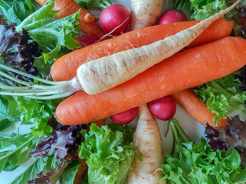 Karottenkohlrabi des frischen Mischgemüses gesunder Nahrungsmittel, lizenzfreie stockbilder