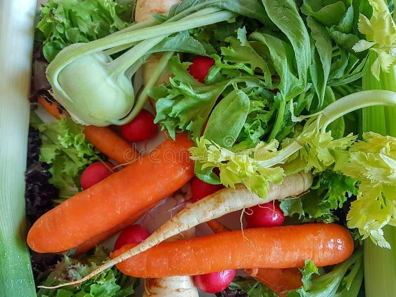 Karottenkohlrabi des frischen Mischgemüses gesunder Nahrungsmittel, stockbilder
