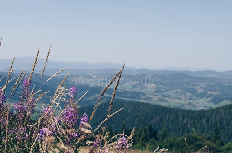 Karpatenberge am Sommer Zakhar Berkut-Berg stockfotografie