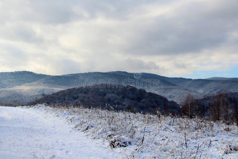 Karpatenwälder lizenzfreies stockfoto