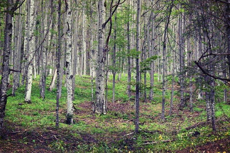 Karpatenwald lizenzfreies stockfoto