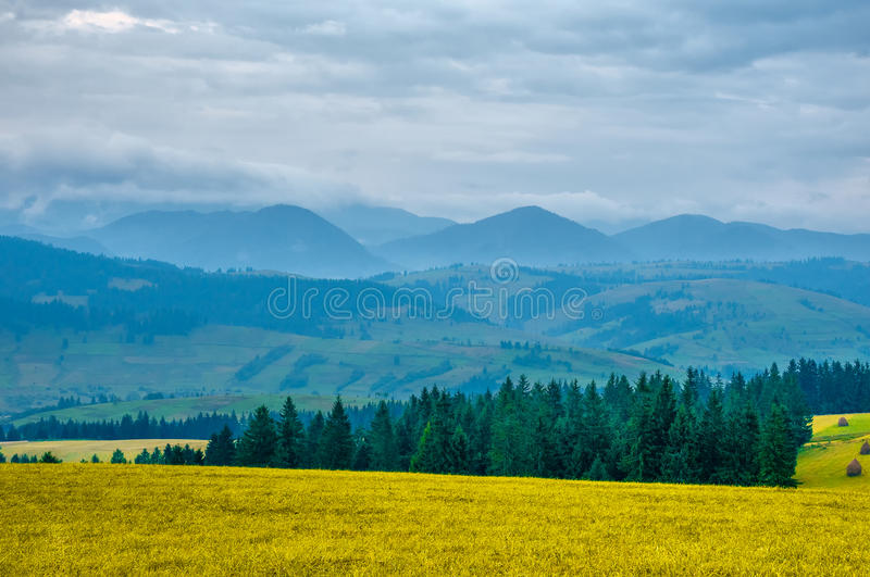 Karpatisch berglandschap vroege ochtend in de zomerdag royalty-vrije stock foto's