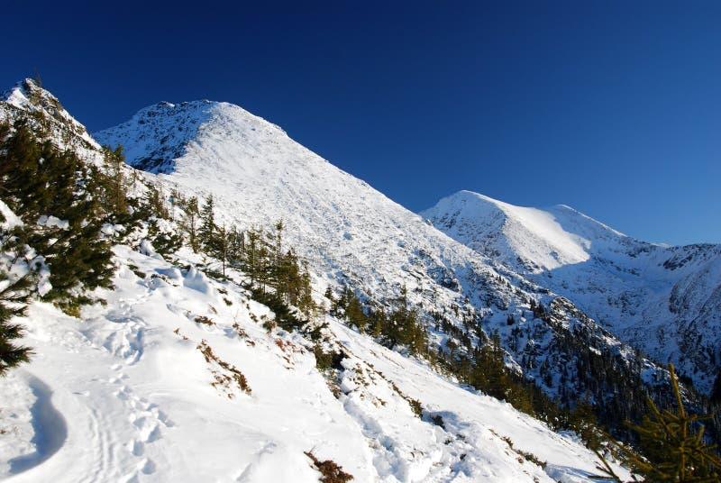Karpatische Bergen in Roemenië royalty-vrije stock foto's