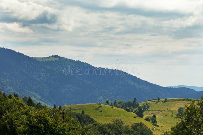 Karpatische bos Zonnige dag in de Oekraïne royalty-vrije stock afbeelding
