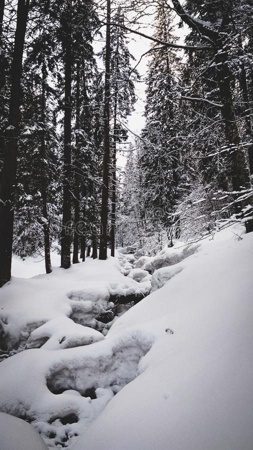 Mountain creek in snowy forest at winter stock photo