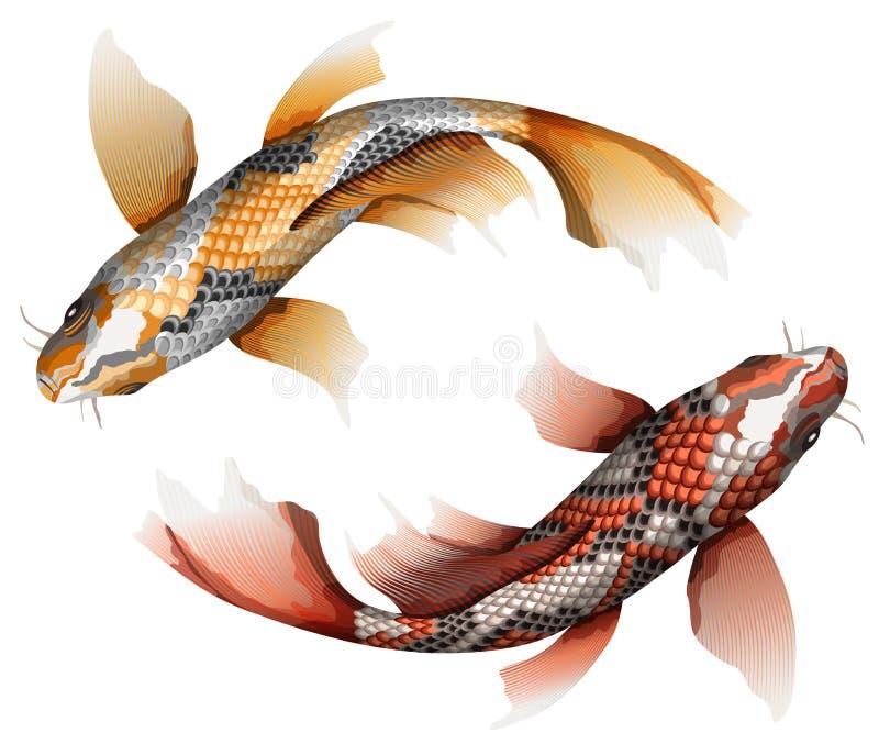 Karpfen, ausführlicher Vektor der traditionellen bunten japanischen Fische lizenzfreie abbildung