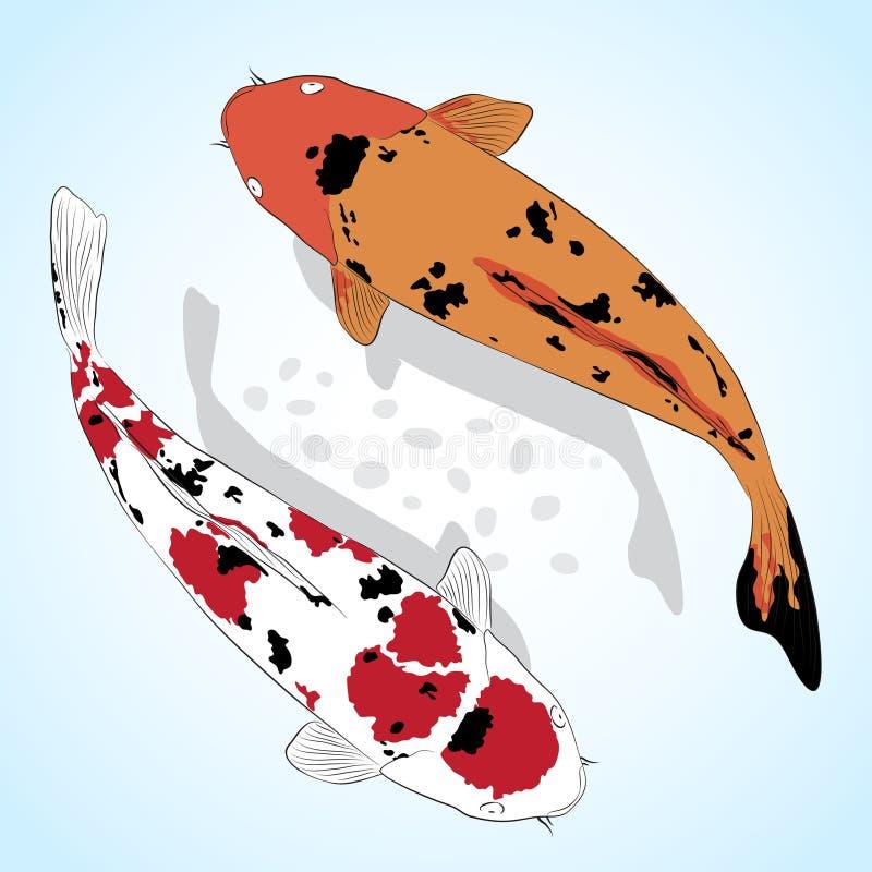 Karpfen. Koi Fische lizenzfreie abbildung