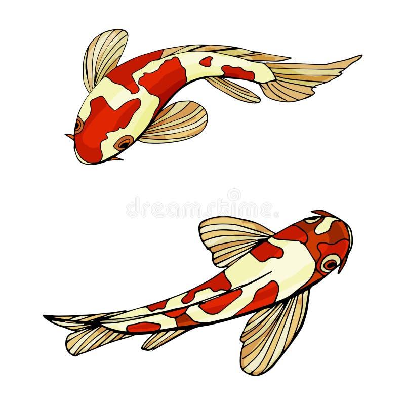 Karpfen Koi fischt Vektorillustration lizenzfreie abbildung