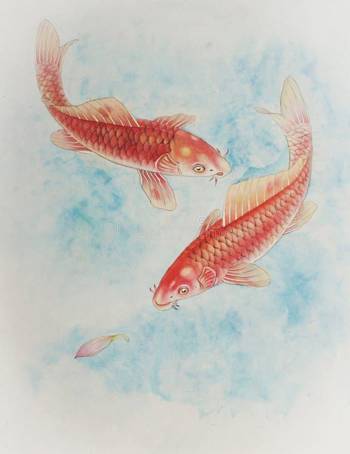 Karpfen mit zwei Rottönen im Wasser lizenzfreie abbildung