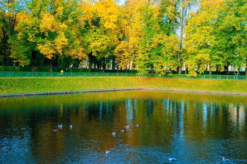 Karpiev池塘秋天风景在夏天庭院里 圣彼德堡,俄罗斯秋天公园  免版税图库摄影