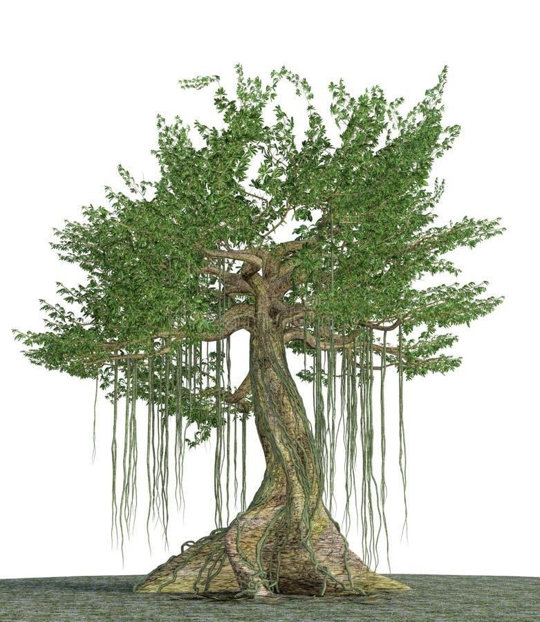 Karpok, radici enormi incredibili stupefacenti degli alberi antichi giganti royalty illustrazione gratis