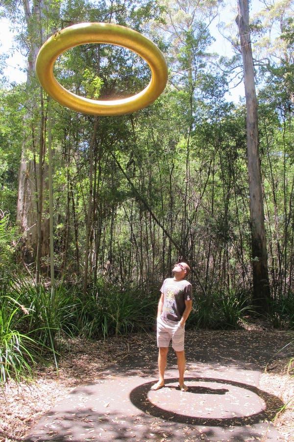 Karri drzewa, Zachodni Australia obraz royalty free