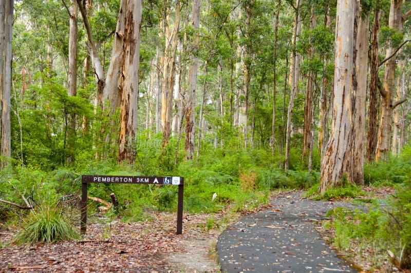 Karri Trees no parque nacional de Gloucester imagens de stock royalty free