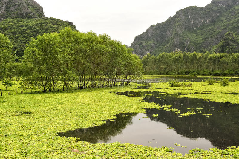 Karst formations and rice fields in Ninh Binh, Vietnam stock photography