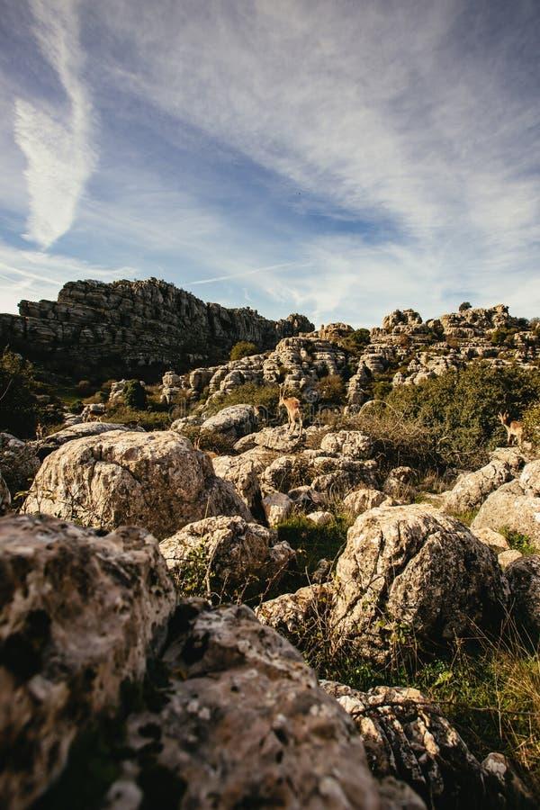 Karst landschap met de vormingen van de kalksteenrots royalty-vrije stock afbeelding
