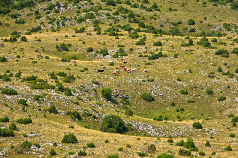 Karstsinkholes, detalj från tjatar på platålandskap royaltyfri fotografi