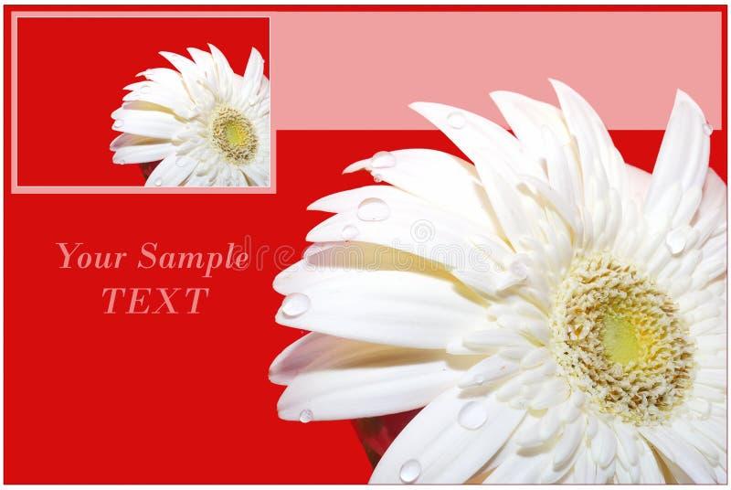 Karte mit herber Blume. lizenzfreies stockbild