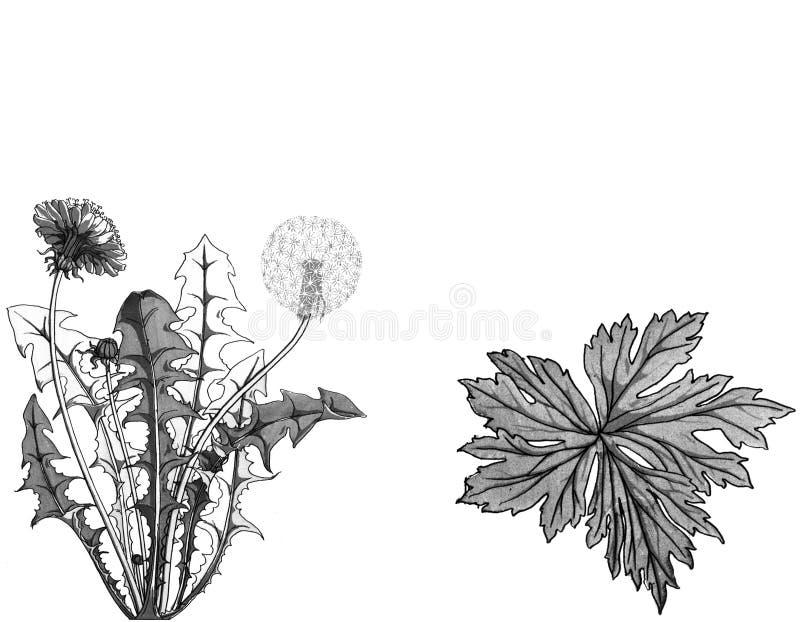 Kartendesign mit Hand gezeichneter Kraut- und Unkrautillustration Dekorative mit Tinte schwärzende Weinlese pflanzt Skizze vektor abbildung