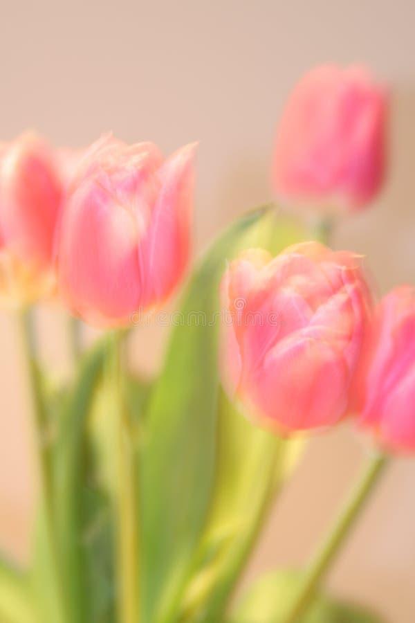 Kartka z pozdrowieniami z tulipanami z przestrzenią dla indywidualnego teksta zdjęcia royalty free