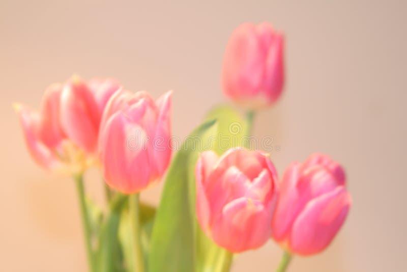 Kartka z pozdrowieniami z tulipanami z przestrzenią dla indywidualnego teksta fotografia stock