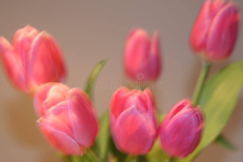 Kartka z pozdrowieniami z tulipanami z przestrzenią dla indywidualnego teksta fotografia royalty free