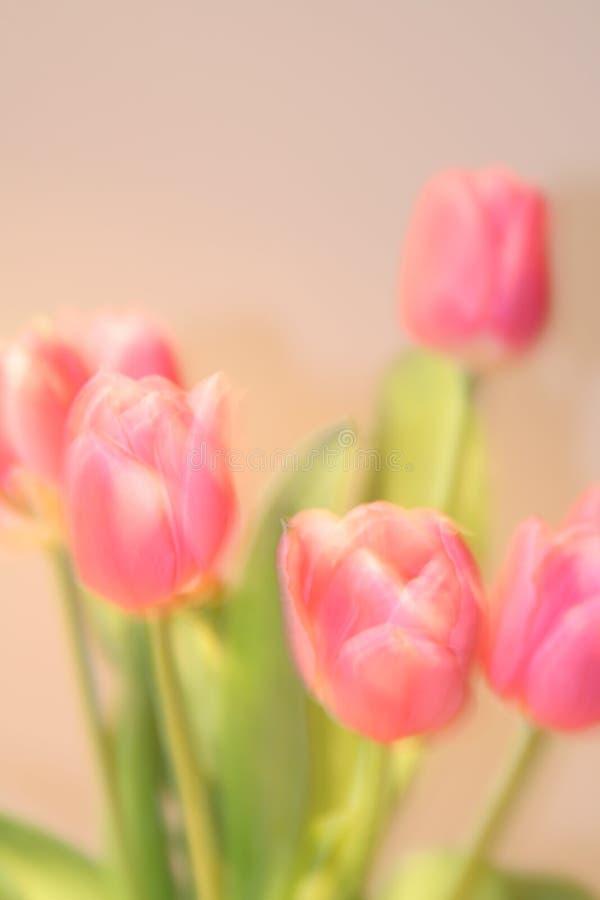 Kartka z pozdrowieniami z tulipanami z przestrzenią dla indywidualnego teksta obraz royalty free