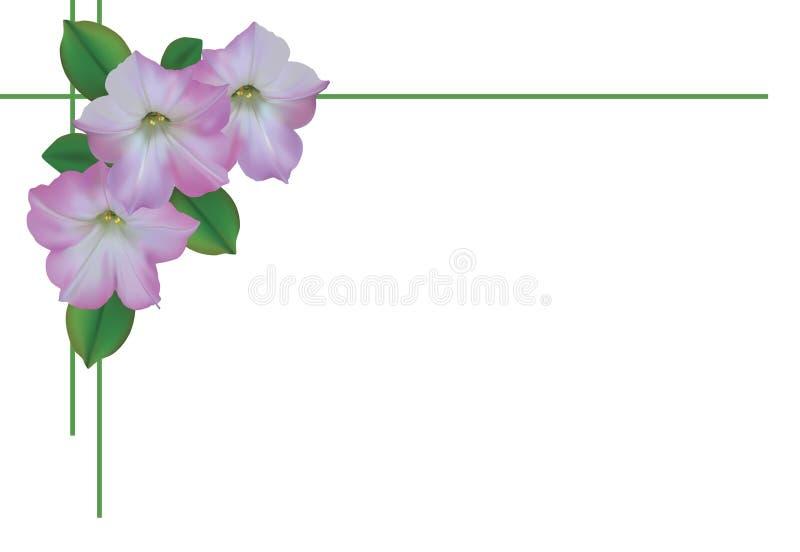 Kartka z pozdrowieniami z światłem - różowe petunie ilustracja wektor