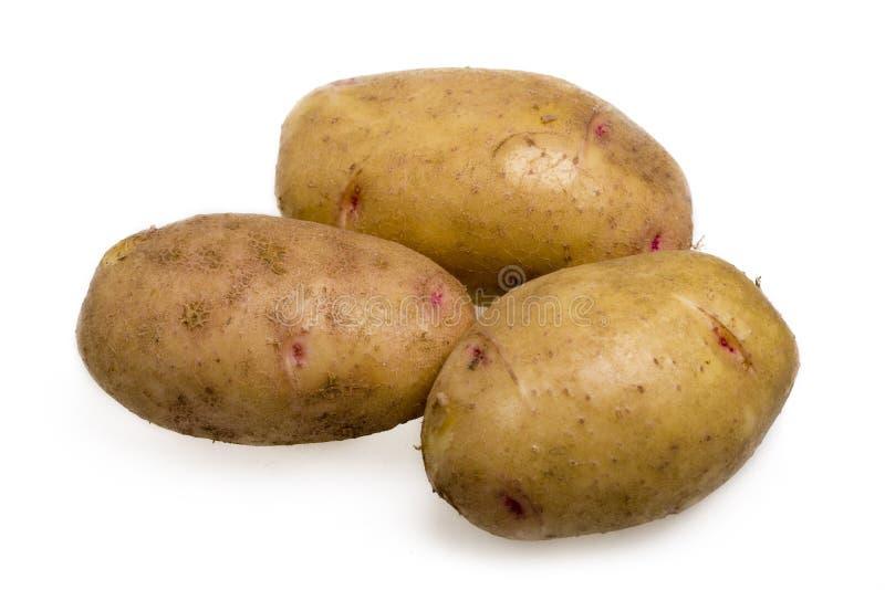 Kartoffel stockfotografie