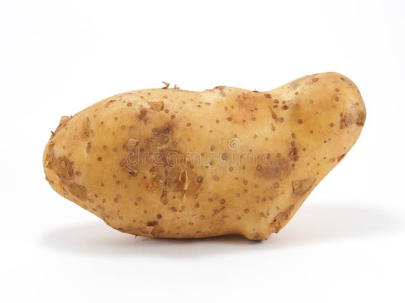 Kartoffel auf weißem Hintergrund lizenzfreie stockfotografie