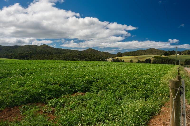Kartoffelbauernhof, starke Sommerernte, Tasmanien, Australien stockbild