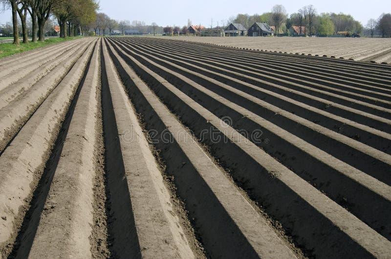 Kartoffelkanten im Kartoffelacker, die Niederlande stockfotografie
