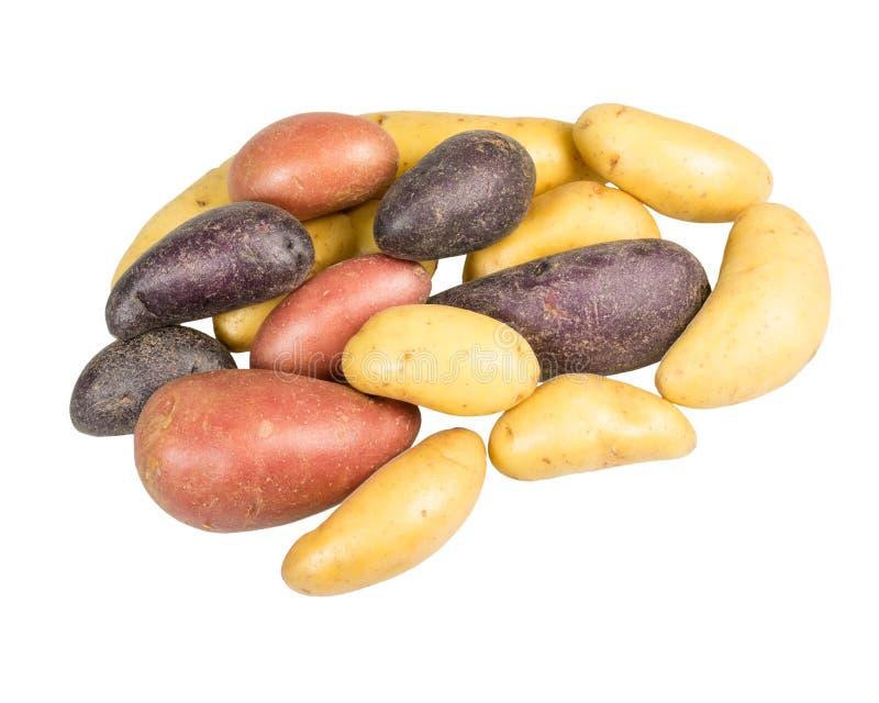 Kartoffeln des kleinen Fischs einiger Farben lokalisiert lizenzfreie stockbilder