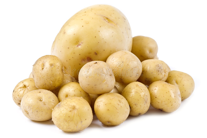 Kartoffeln getrennt auf Weiß lizenzfreie stockbilder