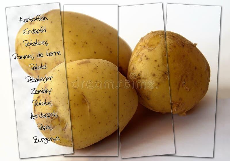 Kartoffeln mit der mehrsprachigen Kennzeichnung stockbilder