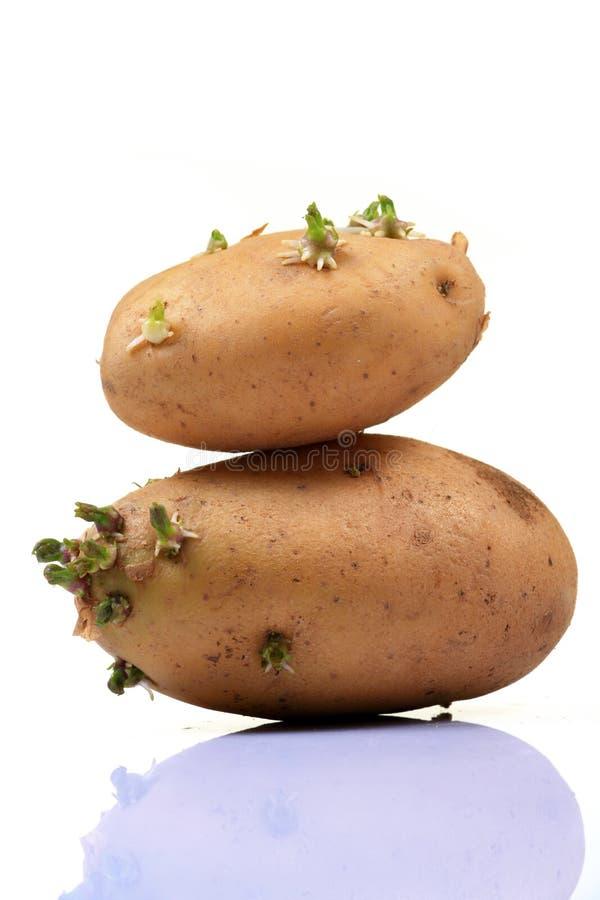 Kartoffelschwerpunkt lizenzfreie stockfotos