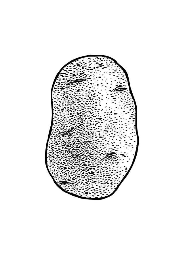 Kartoflana ilustracja, rysunek, rytownictwo, kreskowa sztuka, warzywo, wektor ilustracja wektor