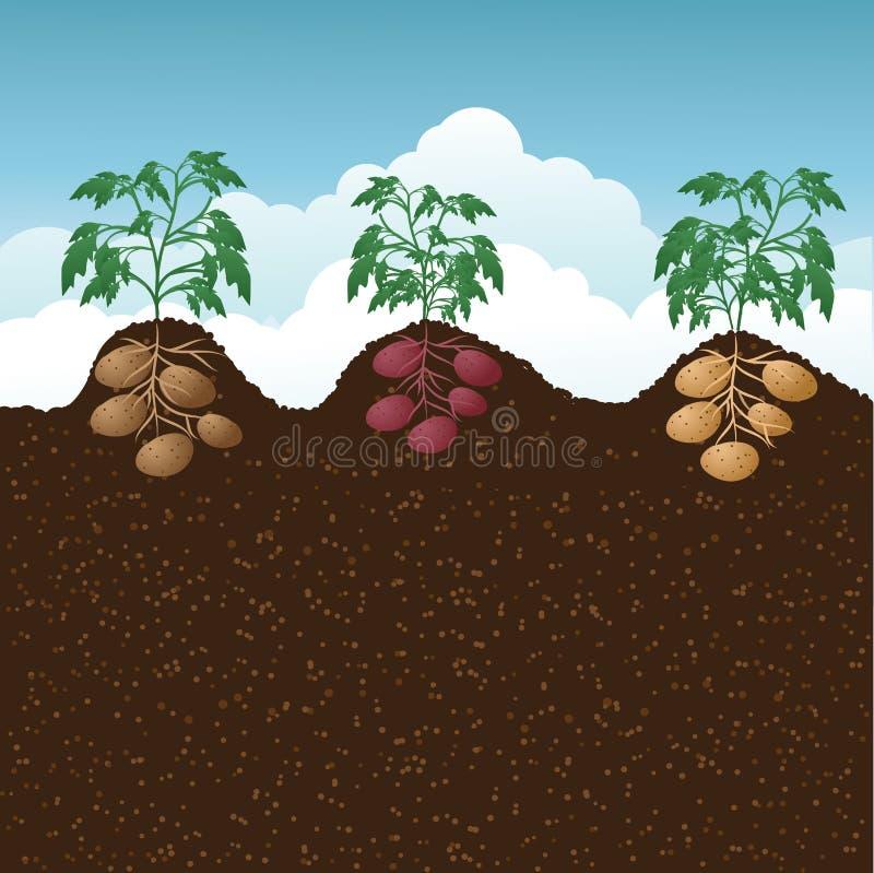 Kartoflani wzgórza royalty ilustracja