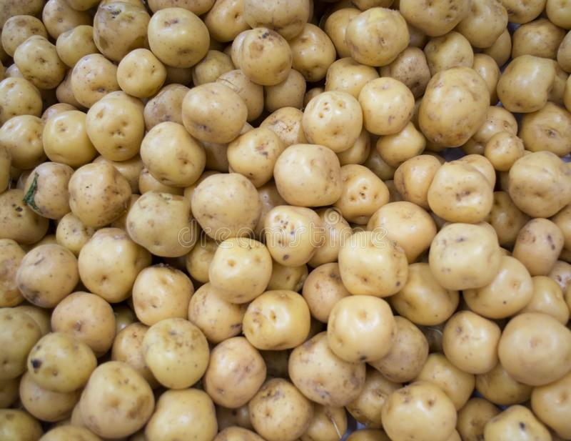 Kartoflany creole obrazy royalty free