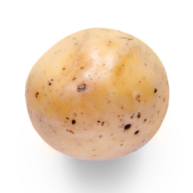 Kartoflany warzywo obraz royalty free