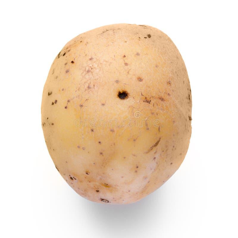 Kartoflany warzywo fotografia royalty free