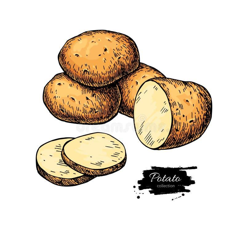 Kartoflany wektorowy rysunek Odosobniona ręka rysować grule warzywo ilustracja wektor