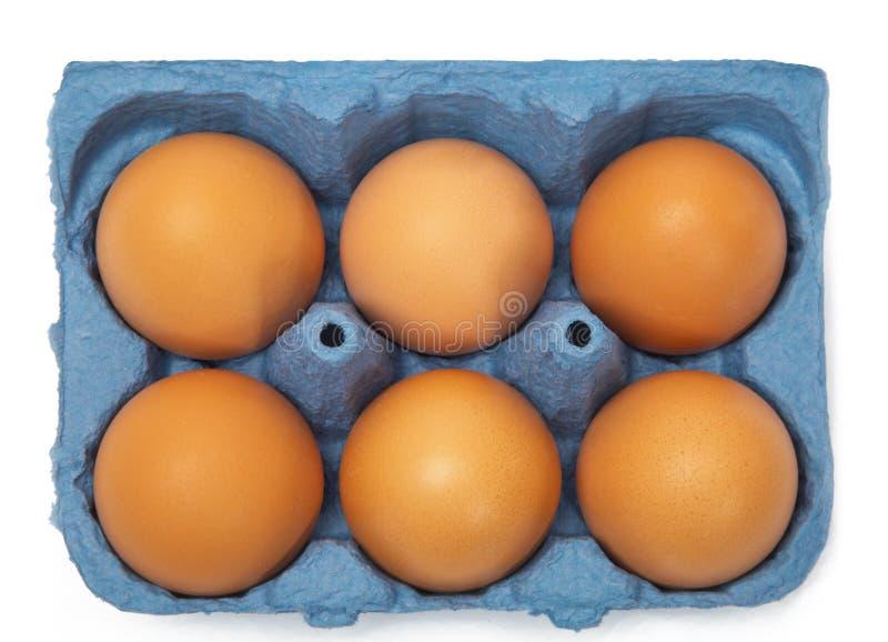 Karton sześć jajek obrazy stock