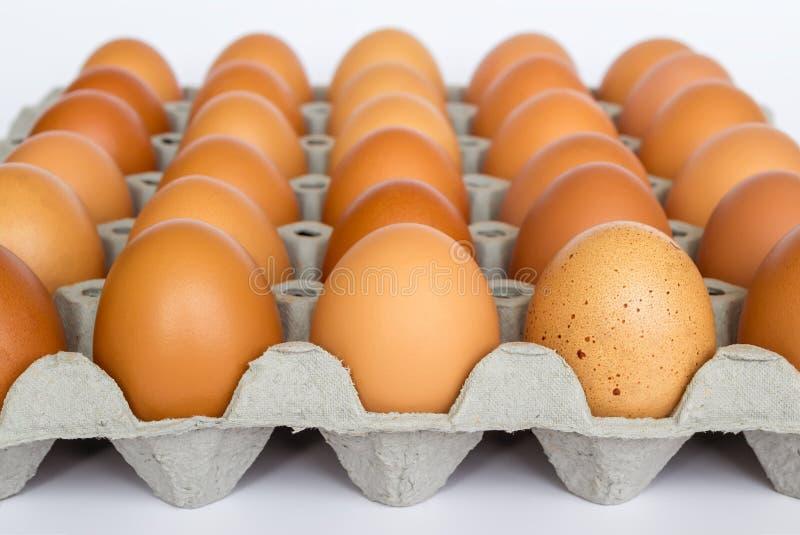 Kartondocument het dienblad met 30 bruine kippeneieren, sluit omhoog op witte achtergrond Selectieve nadruk, vooraanzicht royalty-vrije stock foto's