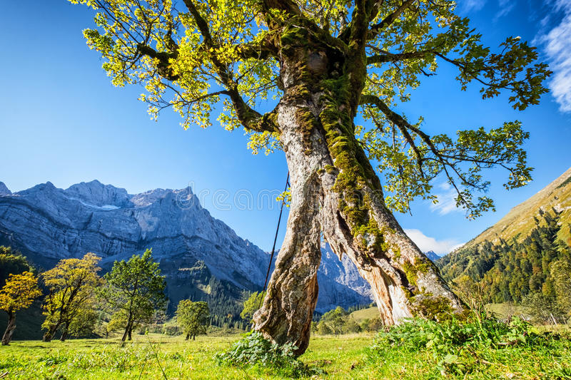 Karwendel mountains royalty free stock photos